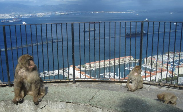 Family of monkeys lounges at a viewpoint overlooking the ships refueling in Gibraltar harbor.