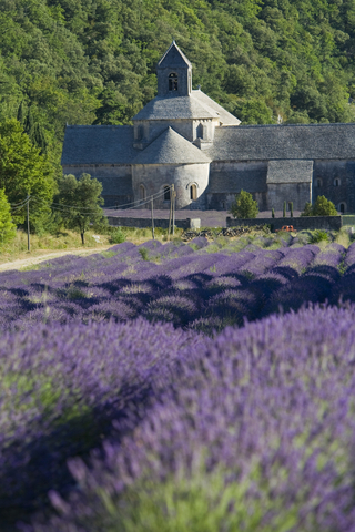 Does lavender in the field small as heavenly as it does in the linen closet? Photo by Ivan Vrbic