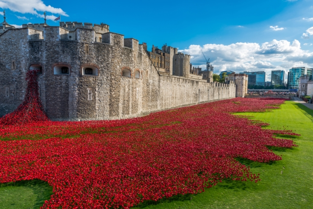 Installation of ceramic poppies at the Tower of London. Photo by Beataaldridge