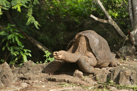 Lonesome George, the last of his subspecies. Photo by Pablo Hidalgo | Dreamstime.com