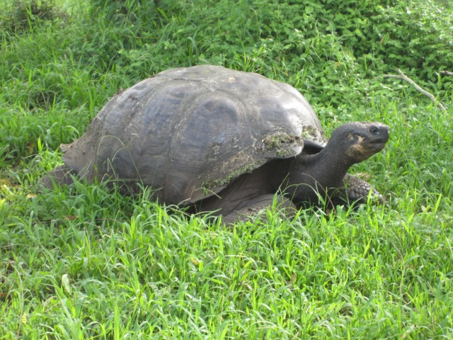 This is one of the first tortoises I encountered. Photo by J. Emmons