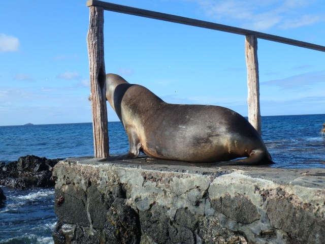 With almost visible sighs, the sea lions moved off the steps.